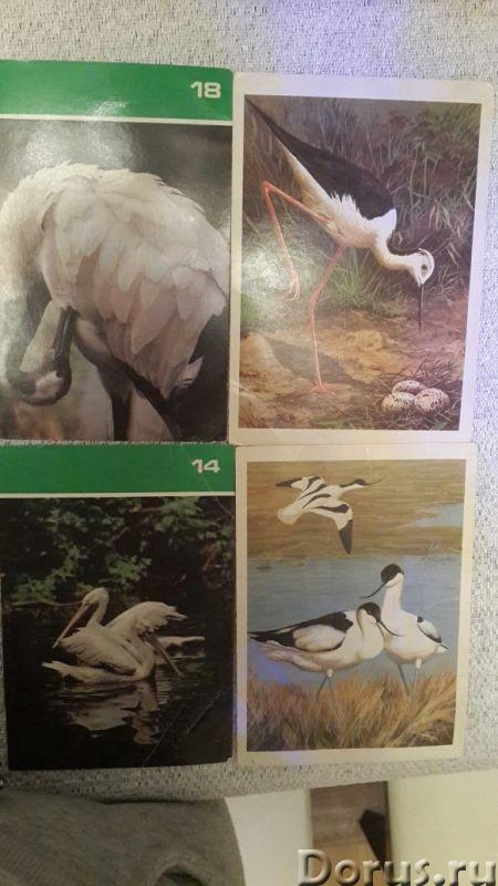Коллекция открыток - Искусство и коллекционирование - Реализуем коллекцию открыток с изображение В..., фото 5